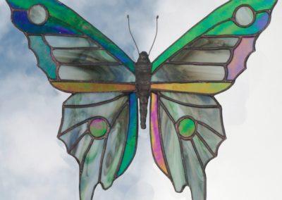 a-butterfly 40-Schneider, Bob